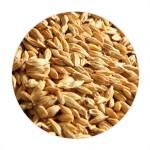 Barley (Jau) - 500 GMS