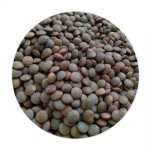 Black Masur Whole  - 500 GMS