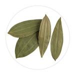 Bay Leaf/Tejpatta - 50 GMS